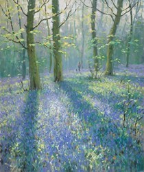 Bluebells (Shadows) by James Preston -  sized 20x24 inches. Available from Whitewall Galleries